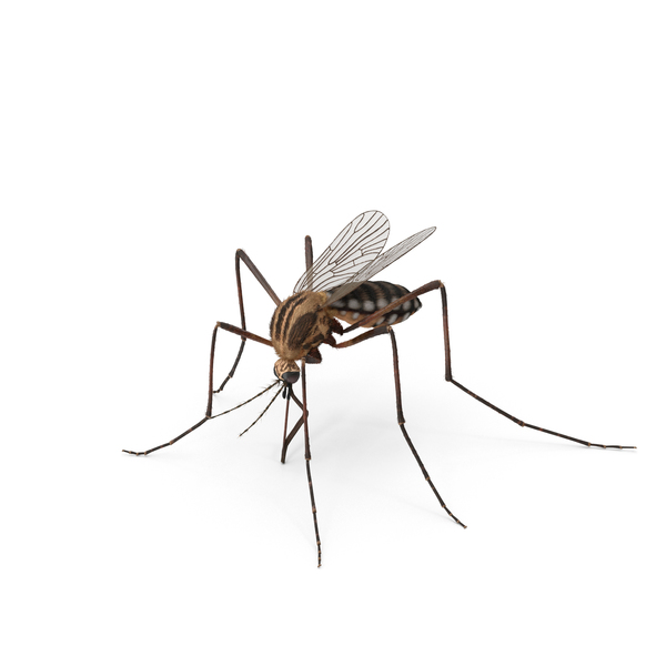 Mosquito PNG Images & PSDs for Download.