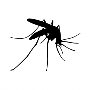 Mosquito PNG Images.