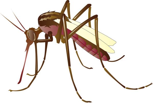Mosquito Free vector in Adobe Illustrator ai ( .ai ) format.
