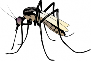 Best Mosquito Clipart #2834.