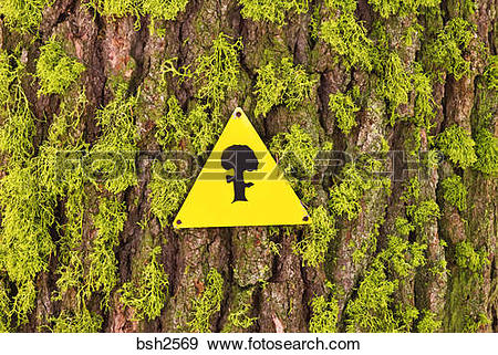 Stock Photograph of Ski trail marker on moss covered tree, Sequoia.