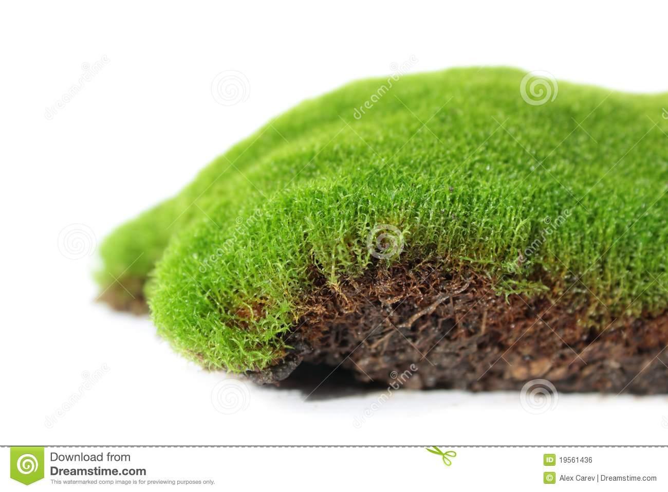 Moss Plant Stock Illustration.