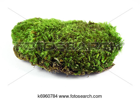 Moss Clipart Free.