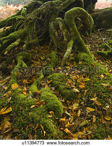 Stock Photo of England, Hampshire, New Forest. Tangled moss.