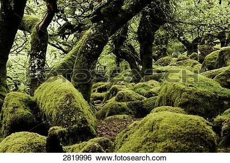 Stock Images of Moss covered rocks and trees in forest, Dartmoor.