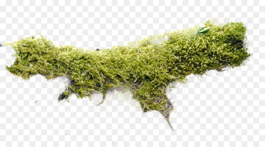 Moss Non.