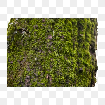 Moss Png, Vector, PSD, and Clipart With Transparent.