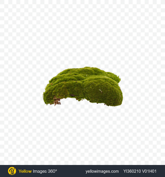 Download Clump of Moss Transparent PNG on Yellow Images 360°.