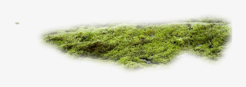 Moss Texture Png.
