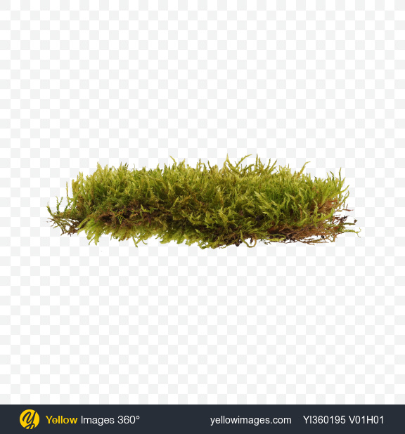 Moss Png (106+ images in Collection) Page 3.