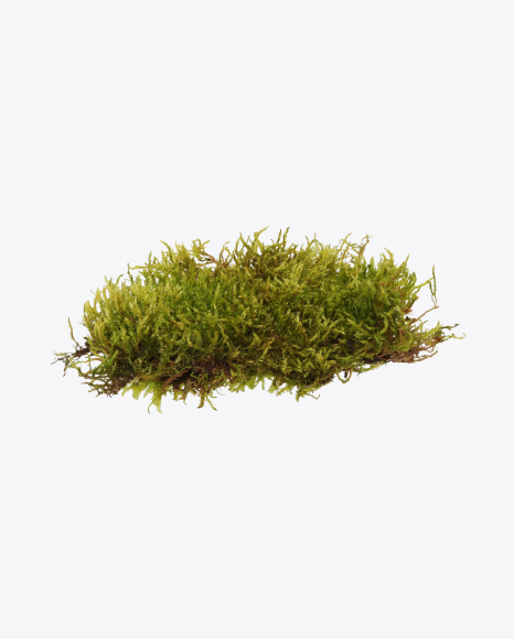 Download Moss Transparent PNG on Yellow Images 360°.