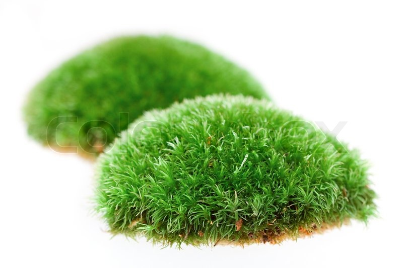 Detail of moss on white background.