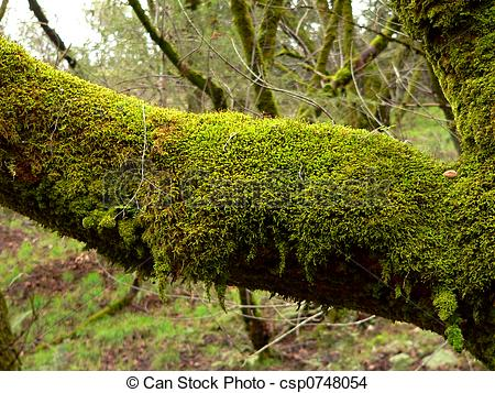 Mossy Images and Stock Photos. 9,647 Mossy photography and royalty.