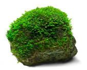Stock Photo of Green moss k6960784.