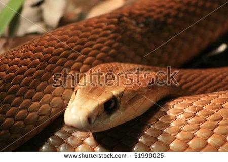 Brown Snake Stock Photos, Royalty.