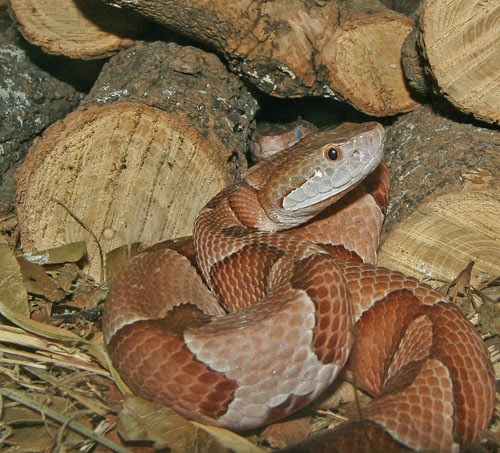 Rules of the Jungle: Kentucky Most Poisonous Snakes.