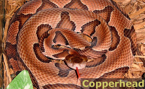 1000+ images about Poisonous Snakes/Spiders on Pinterest.