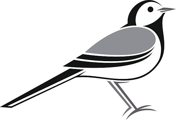 Motacilla Alba Clip Art, Vector Images & Illustrations.