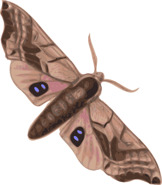 Moth Clip Art at Clker.com.