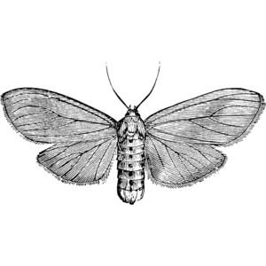 Moth Clip Art.