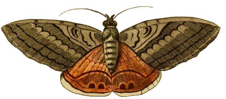 Pix For > Moth Clip Art.