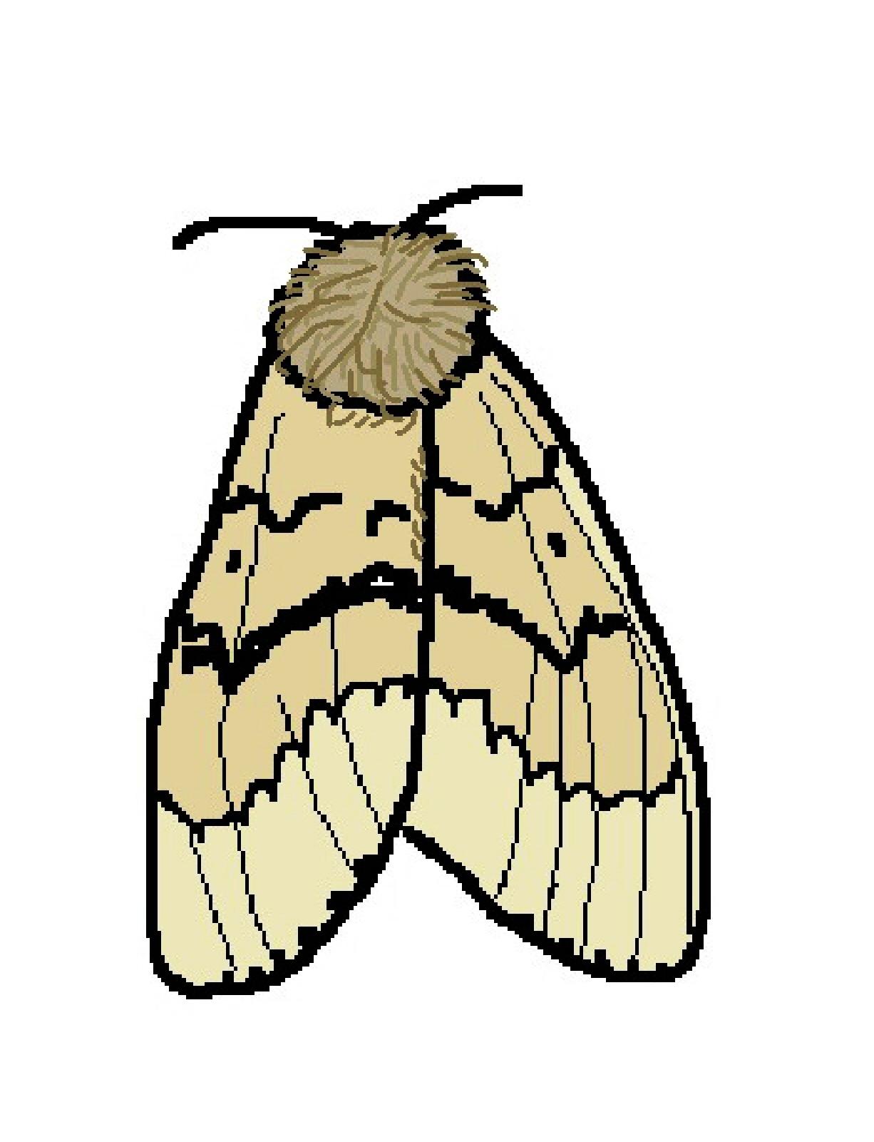 Moth Clipart.