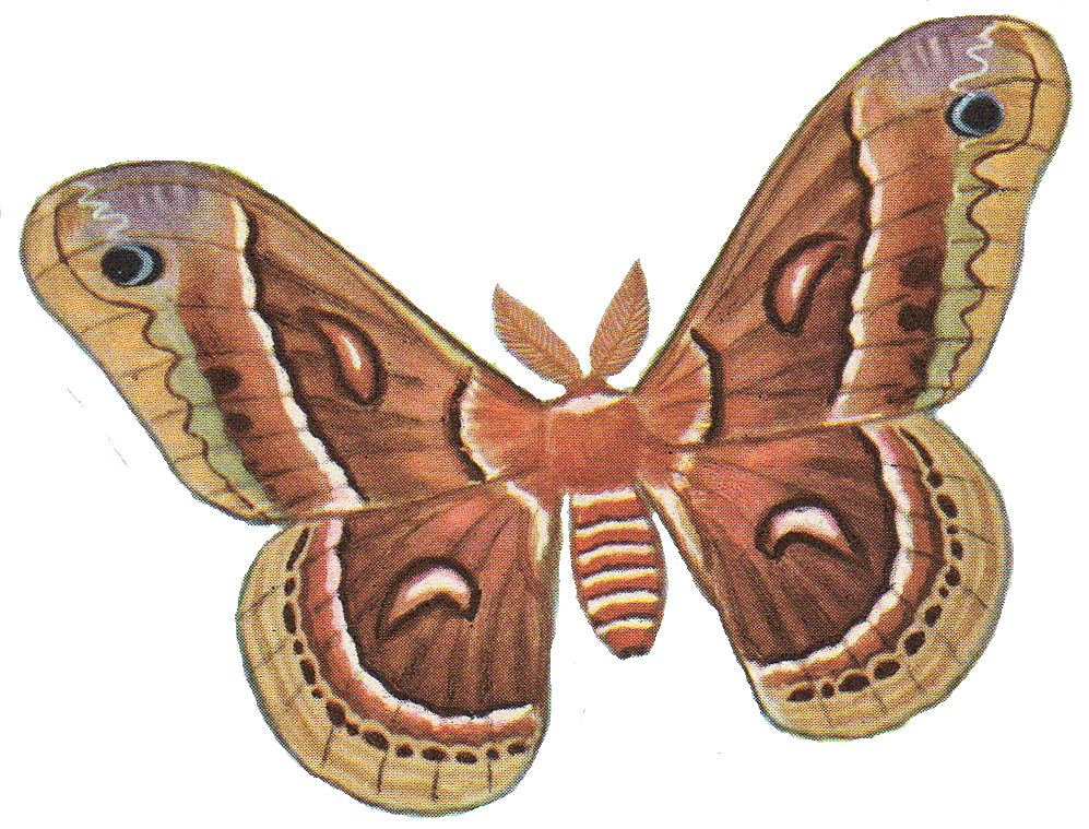 Moths Clipart Clipground