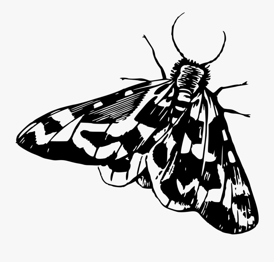 Transparent Moths Png.