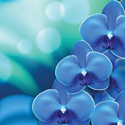 Moth Orchid Clip Art, Vector Images & Illustrations.