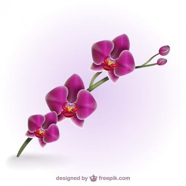 Orchid Vectors, Photos and PSD files.