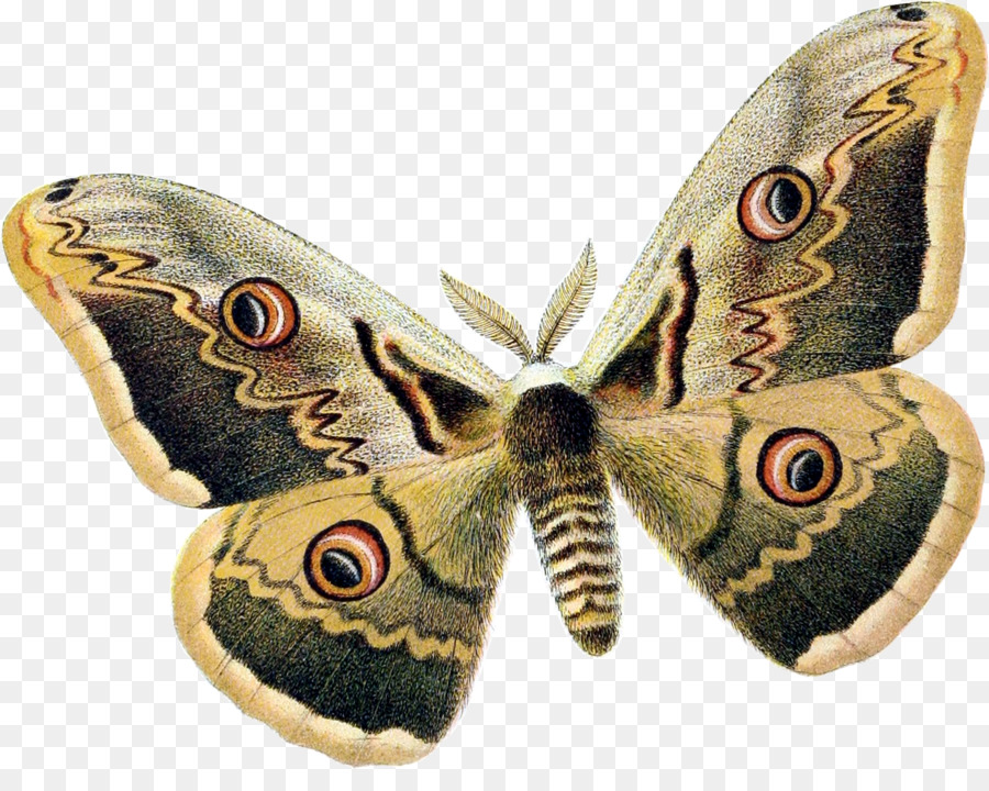 Moth Png (106+ images in Collection) Page 3.