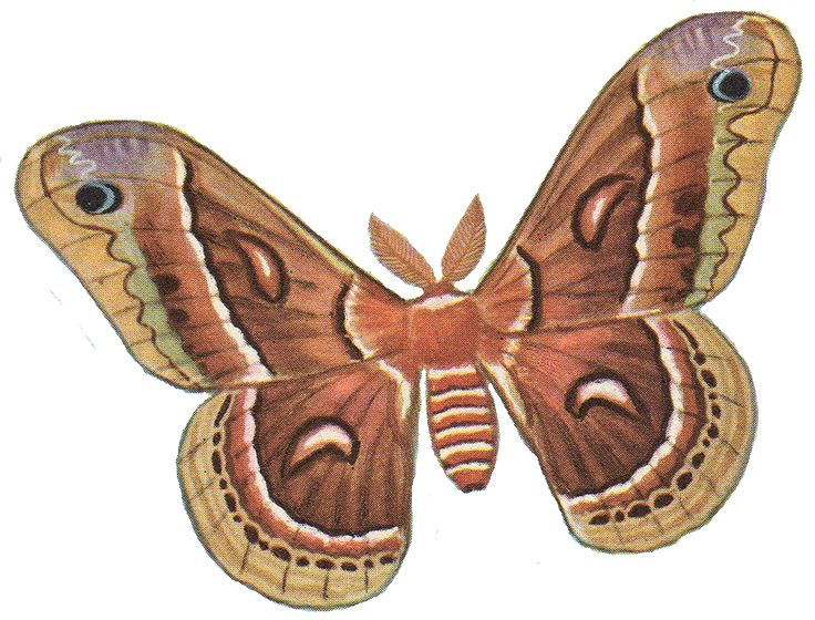 17 Best images about Moths on Pinterest.