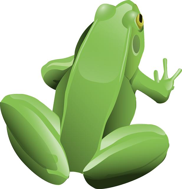 Free photo Animal Amphibian Motorbike Frog Tree Frog Frog.