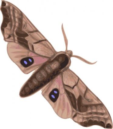 Moth Clip Art, Vector Moth.