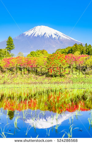Japan Azalea Stock Images, Royalty.