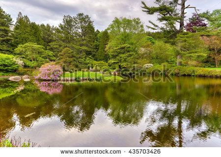 "japanese Azalea"" Stock Photos, Royalty."