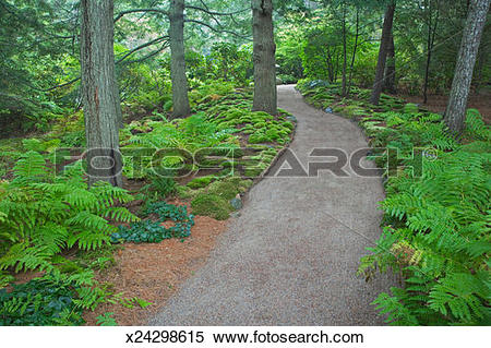 Stock Image of USA, Maine, Mount Desert Island, footpath in.