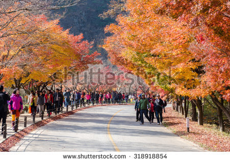Autumn Stock Photos, Royalty.