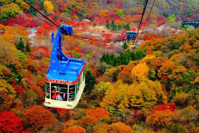 Mt. Naejang Autumn Foliage Tour (Mid Oct ~ Mid Nov).