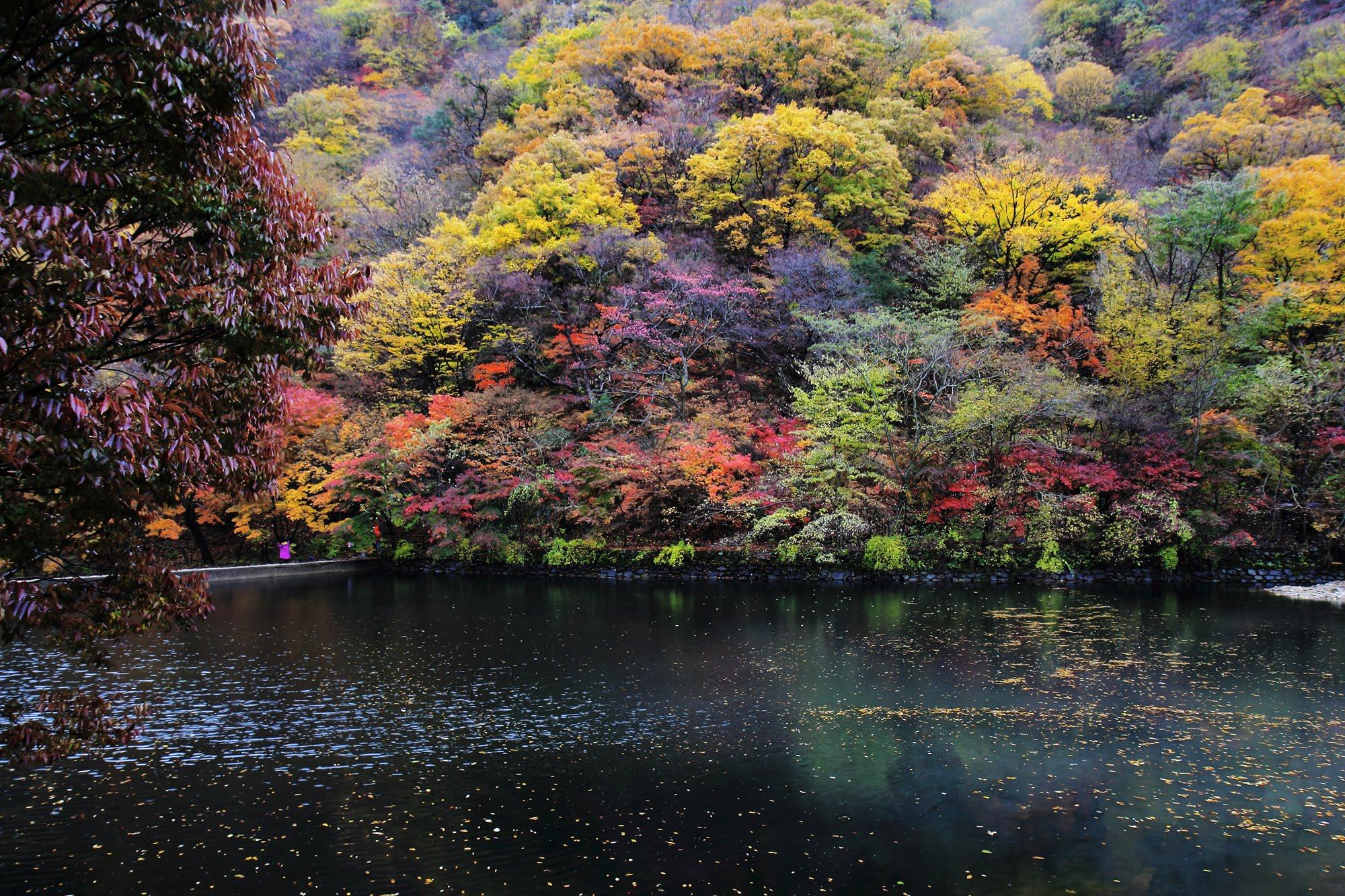 Mt.Naejangsan(內藏山내장산) National Park.