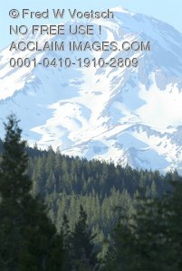 Clip Art Stock Photo of Mount Shasta Through The Forest.