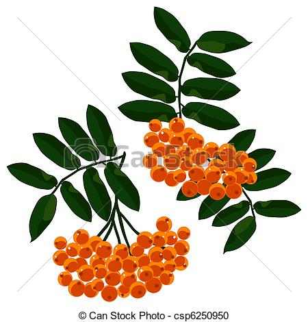 Mountain ash Clipart Vector and Illustration. 629 Mountain ash.
