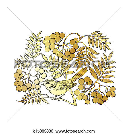 Clip Art of Mountain ash. k15083836.