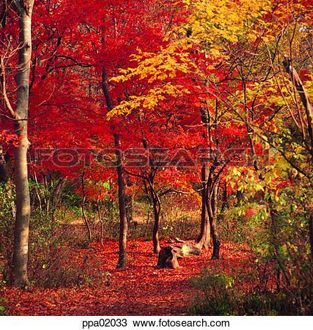Stock Photo of autumn scenery, fall, autumn forest, autumn wood.