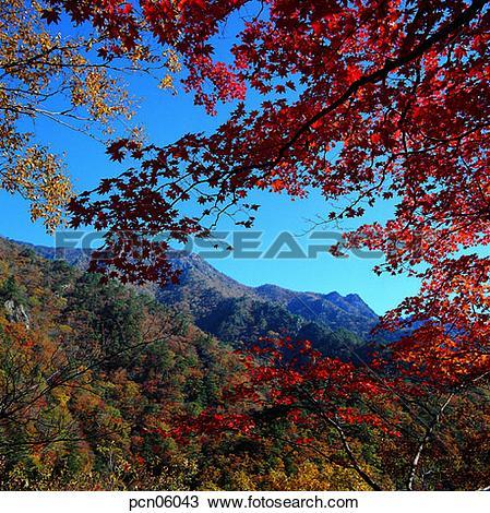 Stock Photo of scene, fall, autumn view, autumn scenery, autumn.