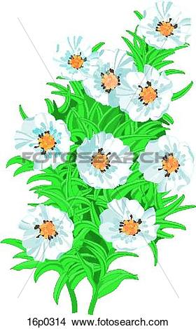 Clipart of Mountain Avens 16p0314.