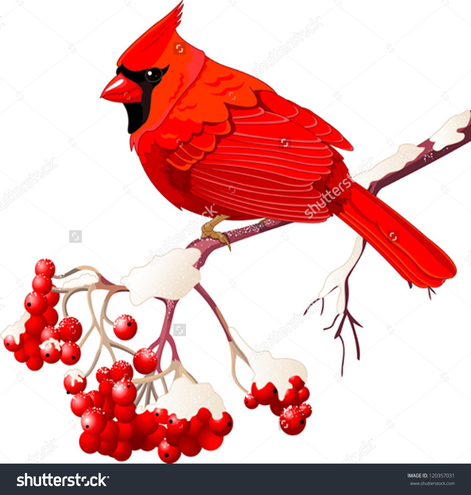 Red Cardinal Bird Sitting On Mountain Stock Vector 120357031.