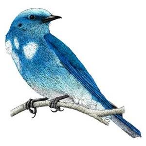 blue bird challenge.
