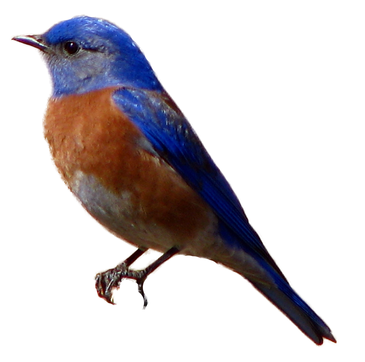 Selected Bird Images.