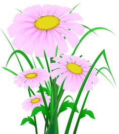 Daisy PNG Clipart Image.